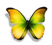 Turkuaz sarı kelebek — Stok fotoğraf