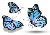 Three blue butterflies — Stock Photo