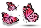 Red butterflies — Stock Photo