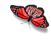 赤い蝶 — ストック写真