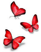 Three red butterfly — Stock Photo
