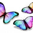 "Stock Photo: Three color butterflies""morpho"","