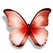 Morpho red butterfly — Stock Photo #41386477
