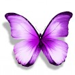 Morpho violet butterfly — Stock Photo #41386489