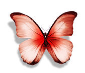 Morpho red butterfly — Stock Photo