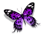 Violet butterfly — Stock Photo