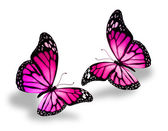 Two pink butterflies — ストック写真