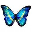 Morpho blue turquoise butterfly — Stock Photo #41394075
