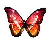 色の蝶 — ストック写真