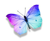 Morpho turquoise butterfly — Stock Photo