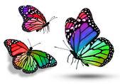 Three color butterflies — ストック写真