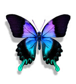 Blue butterfly — Stock Photo