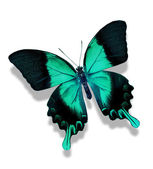 青い蝶 — ストック写真