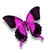 Violet vlinder — Stockfoto