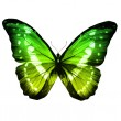 Morpho green butterfly — Stock Photo #41438723