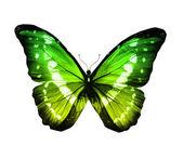 Morpho green butterfly — Stock Photo