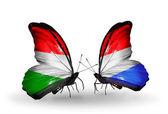 Duas borboletas com bandeiras, hungria e luxemburgo — Fotografia Stock