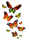 Many different butterflies — Stock Photo