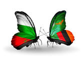 Butterflies with Bulgaria and Zambia flags on wings — Stock Photo