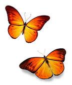 Orange butterflies — Stock Photo