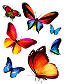 Butterflies — Foto Stock