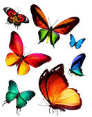 Many butterflies — Photo