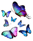 Butterflies — Photo