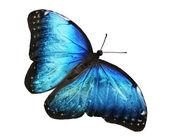 Blue butterfly — Foto de Stock