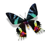 Mariposa colorida — Foto de Stock