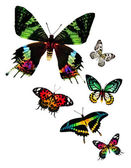 Different butterflies — Stock Photo