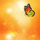 Sunshine with butterflies — Stock Photo