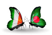 Butterflies with Ireland and Bangladesh  flags on wings — Stock Photo