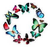 Butterflies — Stock Photo