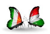 Butterflies with  Ireland and Hungary flags on wings — Zdjęcie stockowe