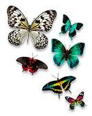 Butterflies — Stockfoto