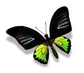 Black and green butterfly — Stock Photo