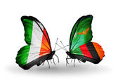 Butterflies with Ireland and Zambia flags on wings — Photo