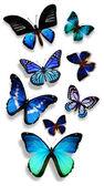 Motyle niebieski — Zdjęcie stockowe