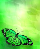 Butterfly on green background — Zdjęcie stockowe