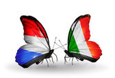 Butterflies with  Luxembourg and  Ireland flags on wings — Stock fotografie
