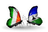 Butterflies with  Ireland and  Lesotho flags on wings — Foto Stock