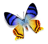 Blue and yellow butterfly — Stock Photo