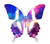 красочные бабочки — Стоковое фото