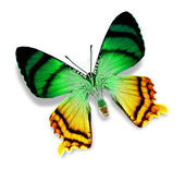 Mariposa verde y amarilla — Foto de Stock