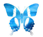 Blue butterfly — Foto de Stock