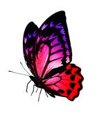 Colorful butterfly — Stockfoto