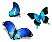 Three blue butterflies — Stock Photo