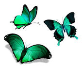 Three green butterflies — Stock Photo