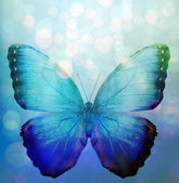 Blue background with butterfly — Stock Photo