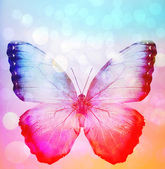 Background with butterfly — Stock Photo